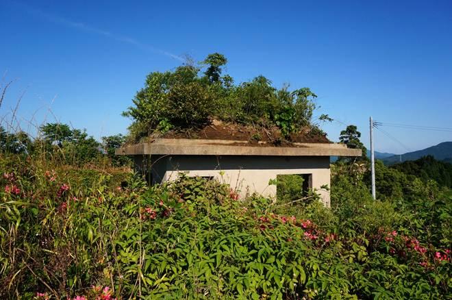 屋根に自然と積もった土が.JPG