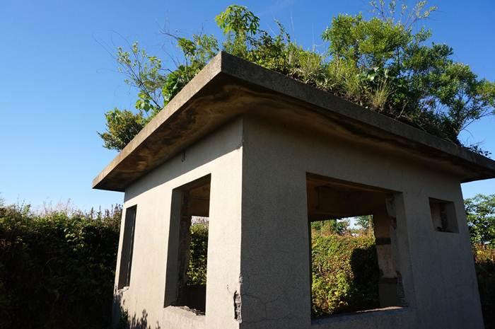 屋根の樹が今時のエコ屋根.JPG