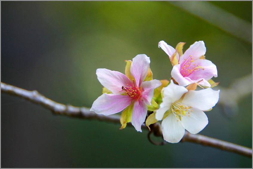 恒例の狂い咲き.JPG